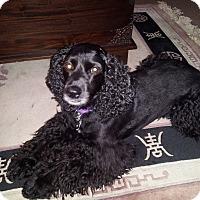 Adopt A Pet :: Luie -Adopted! - Kannapolis, NC
