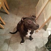 Adopt A Pet :: Victory - Sarasota, FL