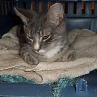 Adopt A Pet :: Jojo (teenage male) - Harrisburg, PA