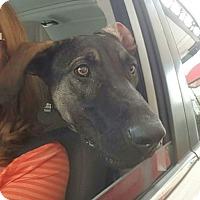 Adopt A Pet :: Mokka - Allison Park, PA