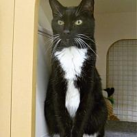 Adopt A Pet :: Bonnie - Naples, FL