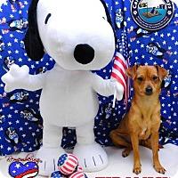 Adopt A Pet :: Tiramisu - Arcadia, FL