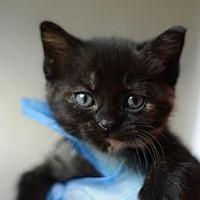 Adopt A Pet :: Jetta - Dahlonega, GA