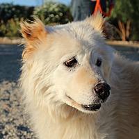 Adopt A Pet :: SOSHI - Eastsound, WA