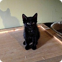 Adopt A Pet :: Licorice - Woodstock, ON