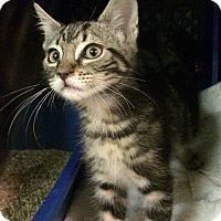 Adopt A Pet :: Guinness - East Brunswick, NJ