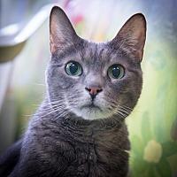 Adopt A Pet :: Rita - New York, NY