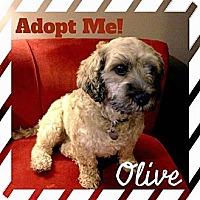 Adopt A Pet :: OLIVE - Mission Viejo, CA