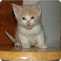 Adopt A Pet :: Bambi - Proctor, MN