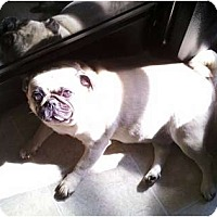 Adopt A Pet :: Roo - Avondale, PA