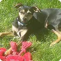 Adopt A Pet :: Boomer - Columbus, OH