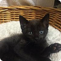 Adopt A Pet :: Bennett - Orlando, FL