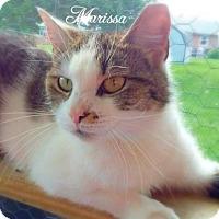 Adopt A Pet :: Marissa - York, PA