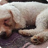 Adopt A Pet :: Rena - Prole, IA