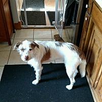Adopt A Pet :: Archie - Cedar, MN