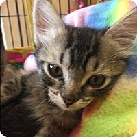 Adopt A Pet :: Merriweather - Alpharetta, GA