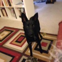 Adopt A Pet :: Sargent - Saskatoon, SK