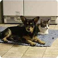 Adopt A Pet :: Jock - Fulton, MD