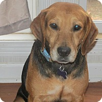 Adopt A Pet :: Delilah - Franklin, VA