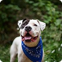 Adopt A Pet :: Royal - Crescent City, CA
