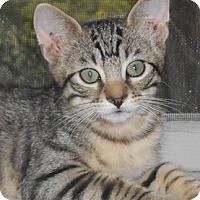 Adopt A Pet :: Birkett - North Highlands, CA