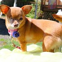 Adopt A Pet :: ona - Eugene, OR