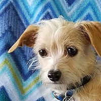 Adopt A Pet :: Pierre - San Antonio, TX