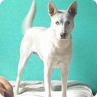 Adopt A Pet :: Shiva - Adamsville, TN