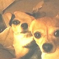 Adopt A Pet :: Peanut & Pepper - Durham, NC