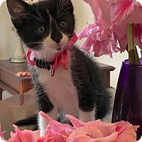 Adopt A Pet :: Gladiola - Colorado Springs, CO