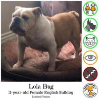 Adopt A Pet :: Lola Bug - Everett, WA