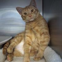 Adopt A Pet :: Buddy - Kinston, NC