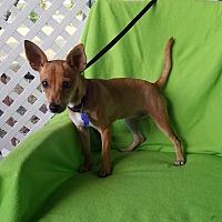 Adopt A Pet :: Roux - Toronto, ON
