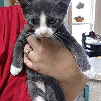 Adopt A Pet :: Tyson - Jacksonville, FL