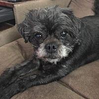 Adopt A Pet :: Moira - Greensboro, MD