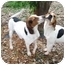 Photo 3 - Treeing Walker Coonhound Dog for adoption in Columbus, Nebraska - Joe