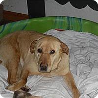 Adopt A Pet :: Leisl - Newport, VT
