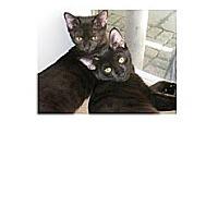Adopt A Pet :: Mustang - Brooklyn, NY