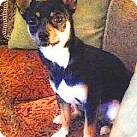 Adopt A Pet :: Breanna sweety pie - Sacramento, CA