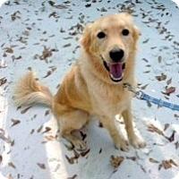 Adopt A Pet :: Jackson - New Canaan, CT