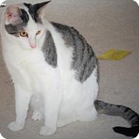 Adopt A Pet :: Zwickel - St. Louis, MO