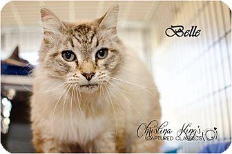 Siamese Cat for adoption in Elizabeth City, North Carolina - Belle
