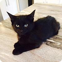 Adopt A Pet :: Heath - Edmonton, AB