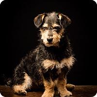 Adopt A Pet :: Halpert - meet him!!! - Norwalk, CT