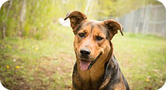 German Shepherd Dog Mix Dog for adoption in Carlsbad Springs, Ontario - Rhomii