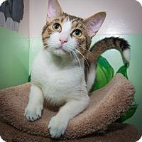 Adopt A Pet :: Zachary - New York, NY