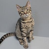 Adopt A Pet :: Jacob - Seguin, TX