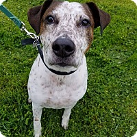 Adopt A Pet :: Toby - Grants Pass, OR