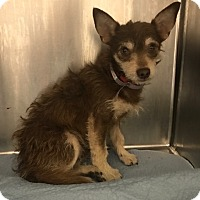 Adopt A Pet :: Jude Law - Brooklyn, NY