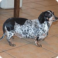 Adopt A Pet :: Sarah - Prole, IA